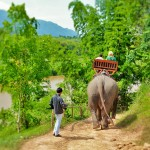 Shangri-Lao elephant riding 6