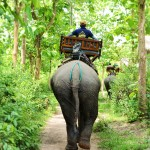 Shangri-Lao elephant riding 8
